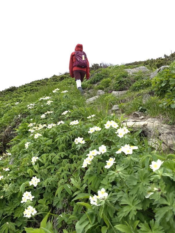 """2020年6月 『花の名山、定山渓天狗岳そして夕張岳へ』 June 2020 \""""Floral Mountains\""""_c0219616_12415227.jpg"""