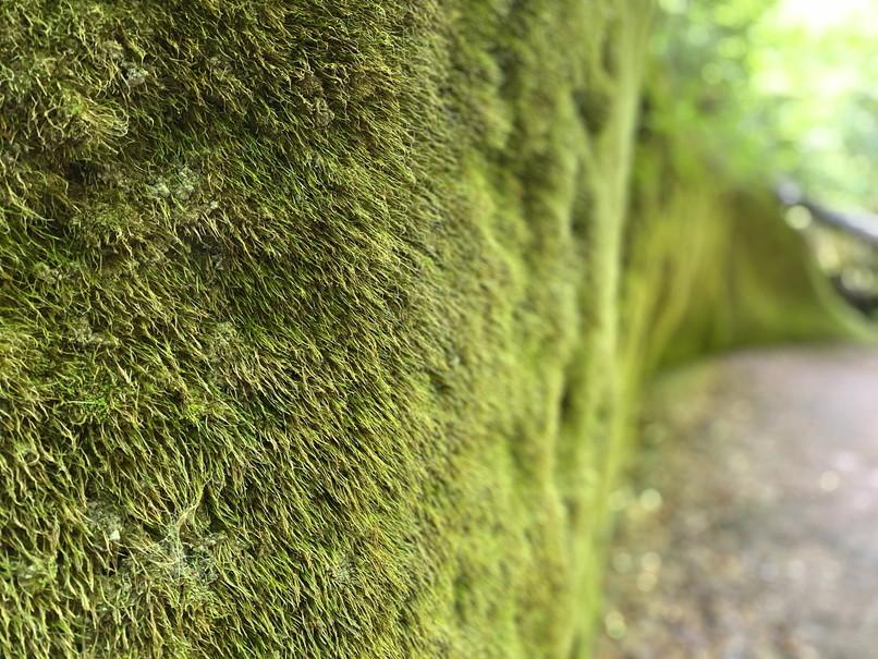 """2020年7月 『支笏湖 風不死岳、苔の峡谷』 July 2020 \""""Gorge of Moss, Mt Huppusi\""""_c0219616_14494361.jpg"""