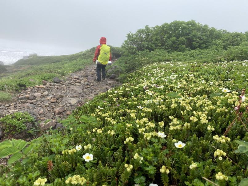 """2020年7月 『大雪山縦走、旭岳からトムラウシへ』 July 2020 \""""Trekking of Mt Taisetsu\""""_c0219616_15545042.jpg"""