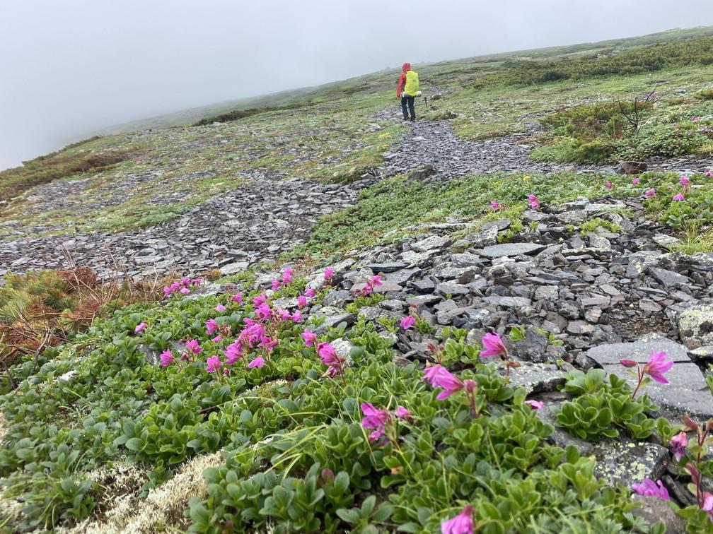 """2020年7月 『大雪山縦走、旭岳からトムラウシへ』 July 2020 \""""Trekking of Mt Taisetsu\""""_c0219616_16341940.jpg"""
