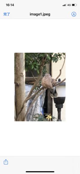 鳩と老婆_c0102228_16192920.png