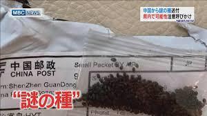 【中国からの謎の種子】その名は「ジャイアント・ホグウィード(バイカルハナウド)」。極めて危険な植物の種だった!_a0386130_18260851.jpeg