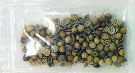 【中国からの謎の種子】その名は「ジャイアント・ホグウィード(バイカルハナウド)」。極めて危険な植物の種だった!_a0386130_18273906.png