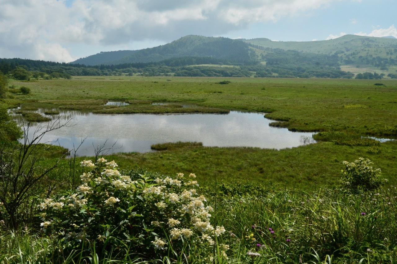 我が家の花たち・そして八島湿原の花たち_e0099737_21503451.jpg