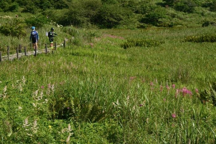 我が家の花たち・そして八島湿原の花たち_e0099737_21572535.jpg