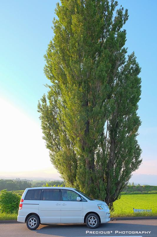 美瑛2020-5:ケンメリの木で、構図の好みを知る。_c0101341_22315054.jpg