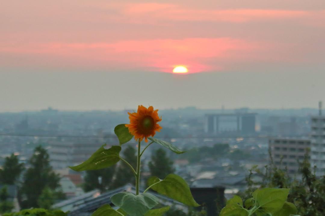 夕焼けと向日葵_e0403850_21032434.jpg