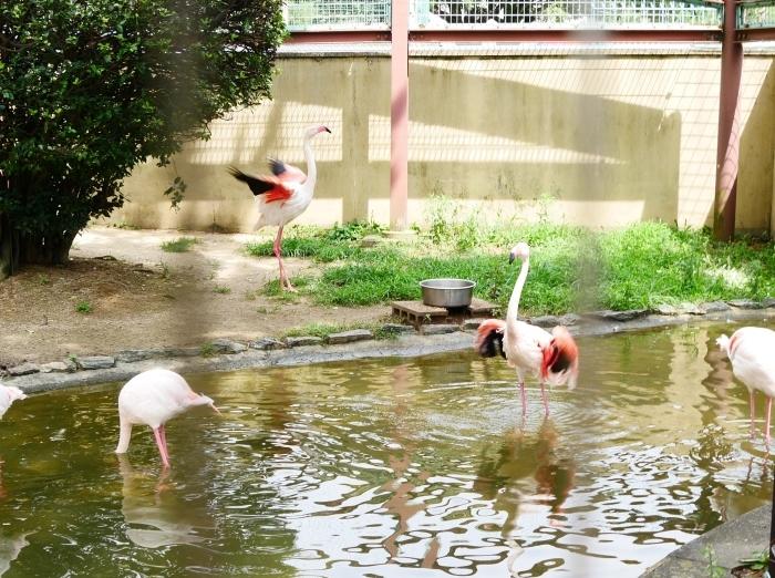 お城の動物園・フラミンゴ  2020-08-07 00:00_b0093754_23102768.jpg