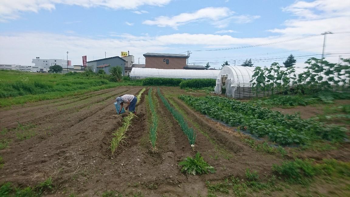 2020年8月2日(日)今朝の函館の天気と気温は。NPOセラピア農福連携事業「晴れたらいいね」農業体験_b0106766_05293236.jpg