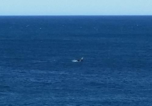 クジラと幻のCafe_d0368073_11485860.jpg