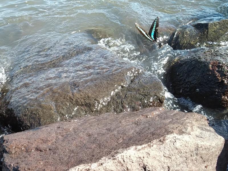 波が・・・・_b0021375_18144211.jpg