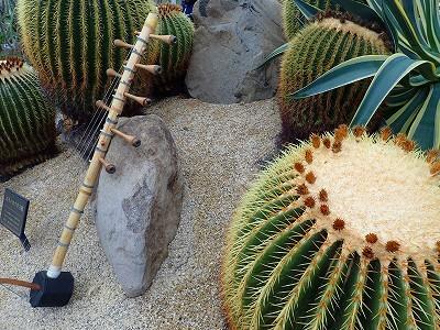 サボテンの中に飾る現代楽器、予告_f0203094_13374343.jpg