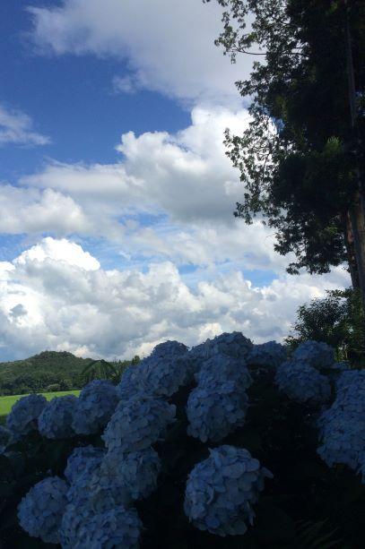 梅雨明け8月、「海」も「山」も 絶好期へ!_a0020109_11254085.jpg