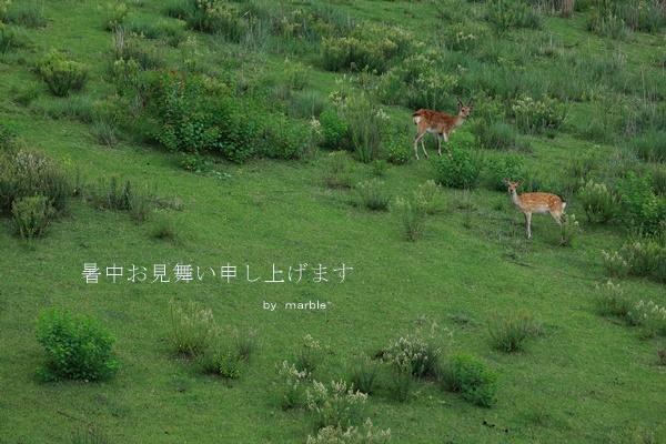 鹿活~お山の鹿たち~_f0353524_20463003.jpg