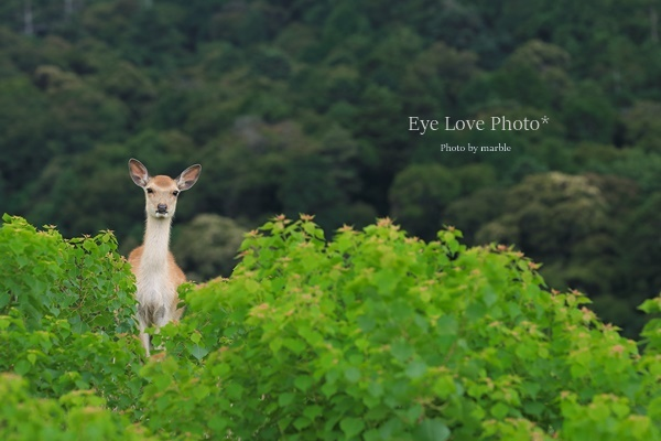 鹿活~お山の鹿たち~_f0353524_20464964.jpg