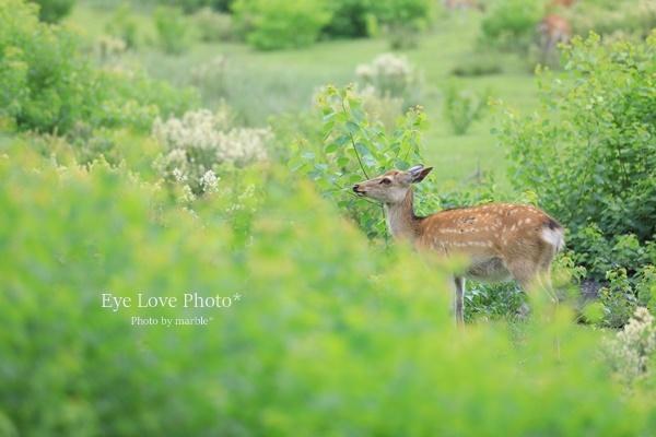 鹿活~お山の鹿たち~_f0353524_20475910.jpg