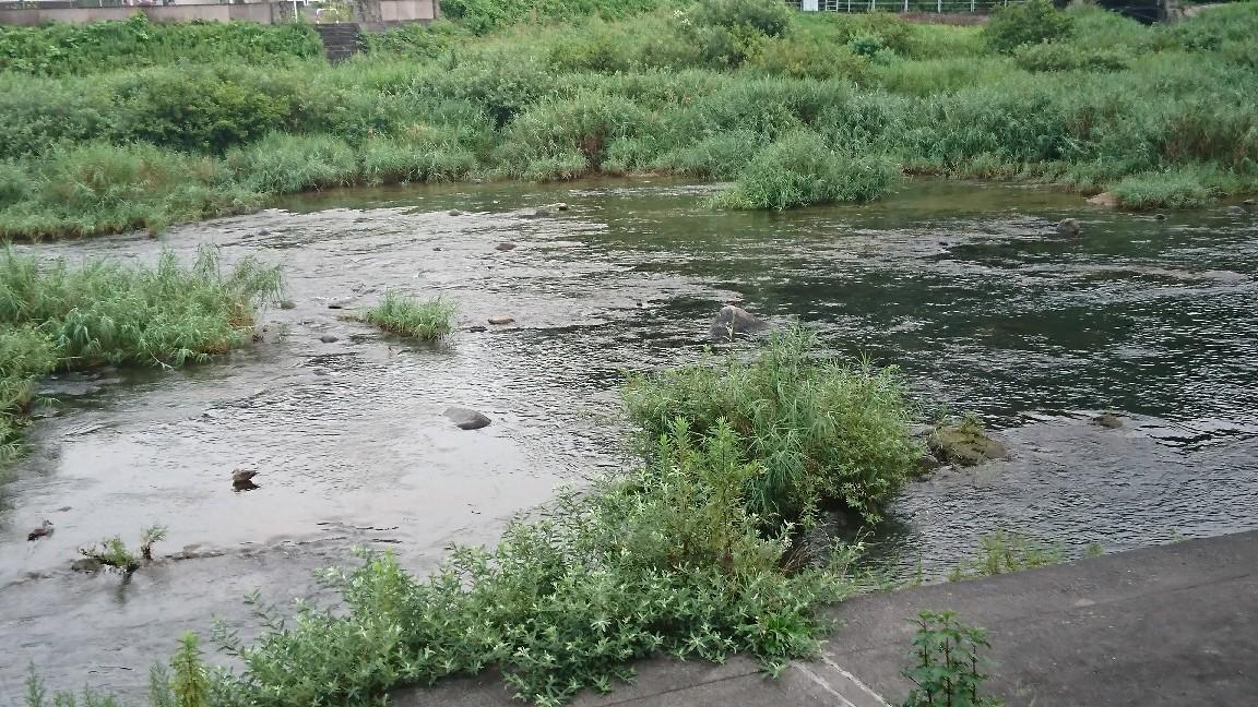 8月3日 河川情報。午..._c0266737_06050770.jpg