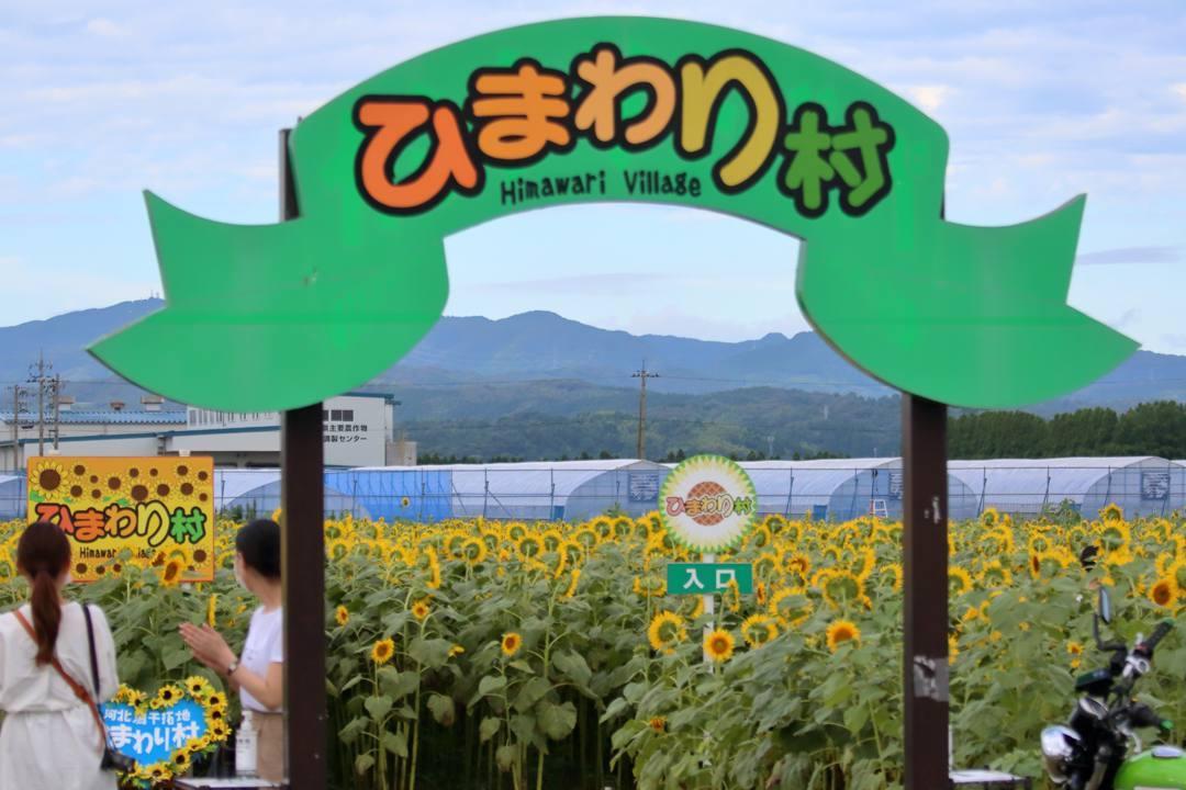 ひまわり村_e0403850_21054109.jpg