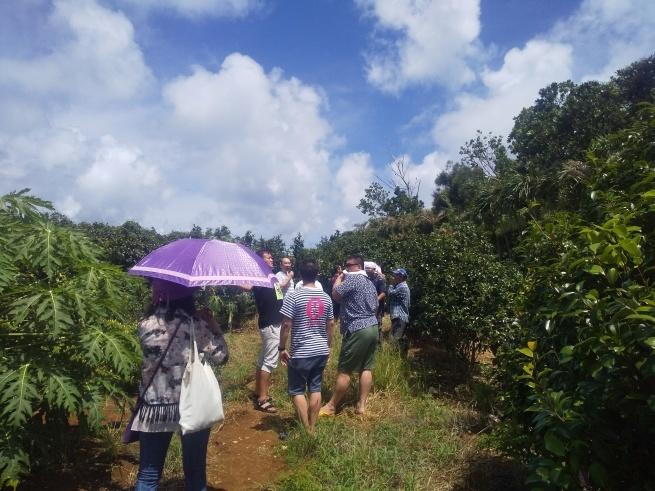 沖縄、宮古島の自然栽培。_f0337851_14261472.jpg