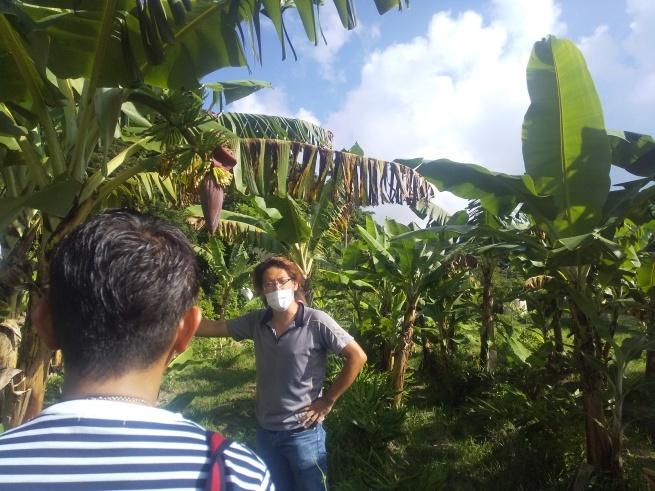 沖縄、宮古島の自然栽培。_f0337851_14381561.jpg