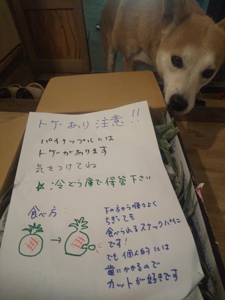 沖縄、宮古島の自然栽培。_f0337851_15093107.jpeg