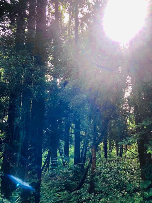 癒しと静養と竹細工と自然。  長文です_d0105967_00381586.jpg