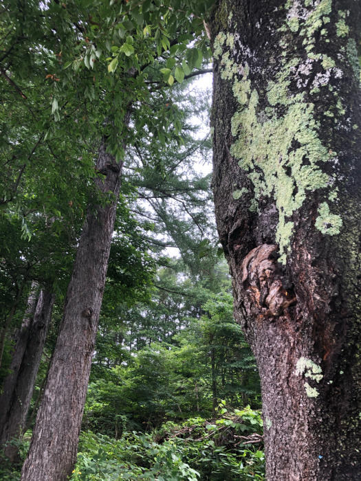 癒しと静養と竹細工と自然。  長文です_d0105967_02075306.jpg