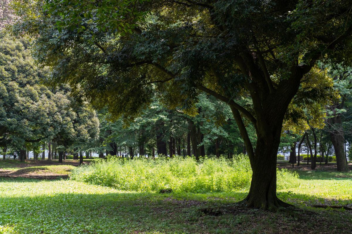 猛暑日は陽を避けて木陰歩き_a0261169_17145501.jpg