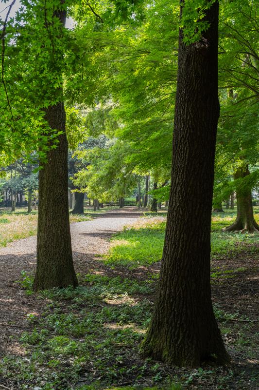 猛暑日は陽を避けて木陰歩き_a0261169_17162132.jpg