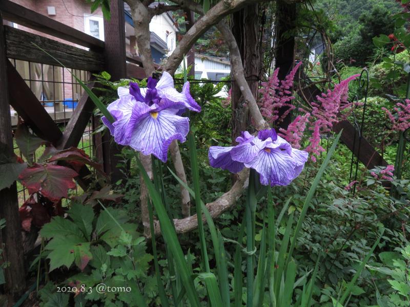 野菜の花、季節の花_f0067179_22573860.jpg