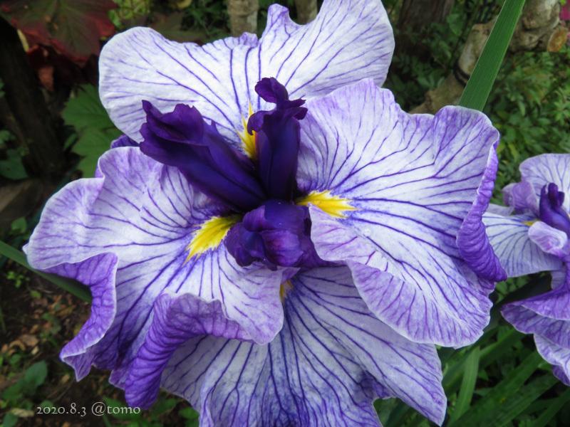 野菜の花、季節の花_f0067179_22574894.jpg