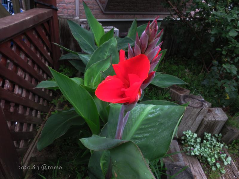 野菜の花、季節の花_f0067179_22583871.jpg