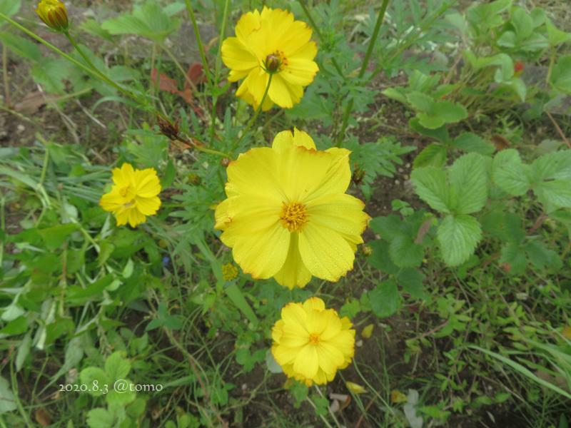 野菜の花、季節の花_f0067179_22585240.jpg