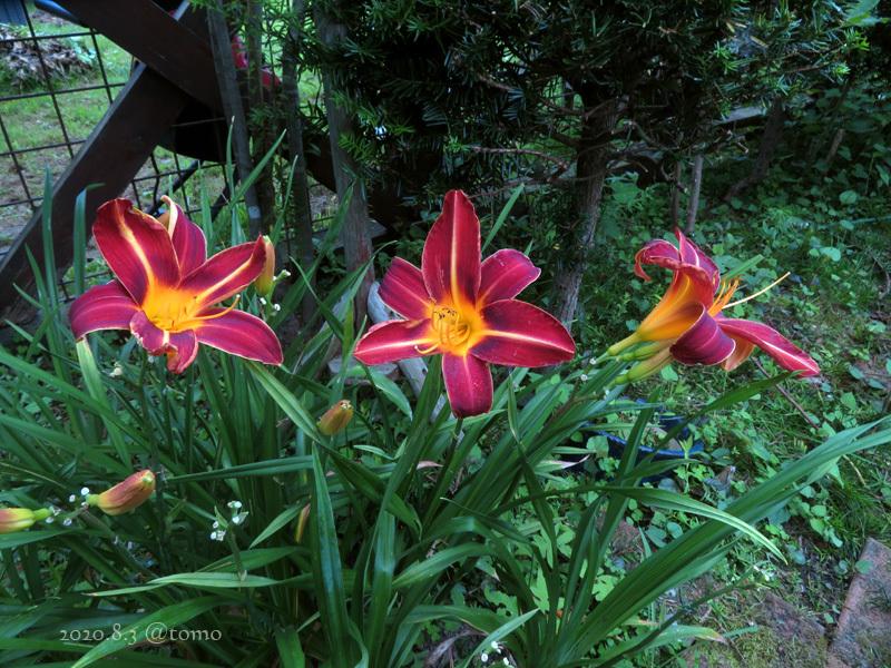 野菜の花、季節の花_f0067179_22592432.jpg