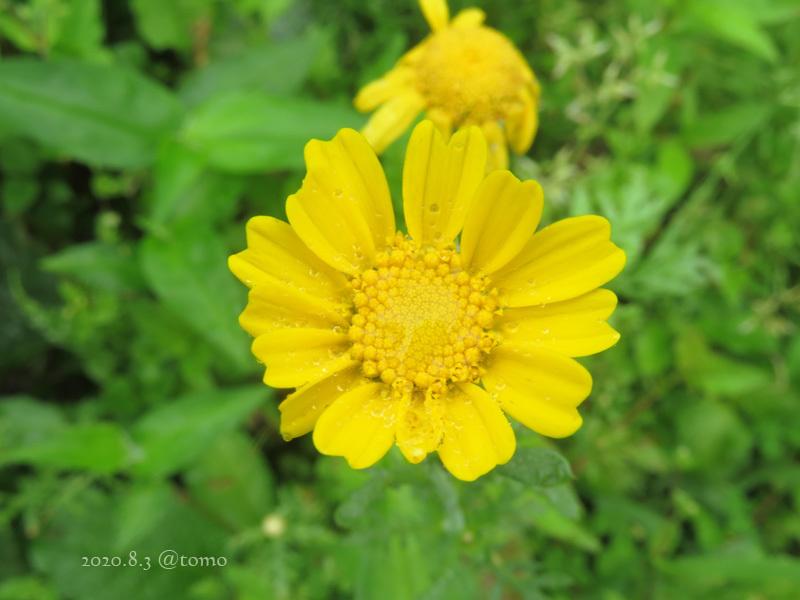 野菜の花、季節の花_f0067179_23013679.jpg