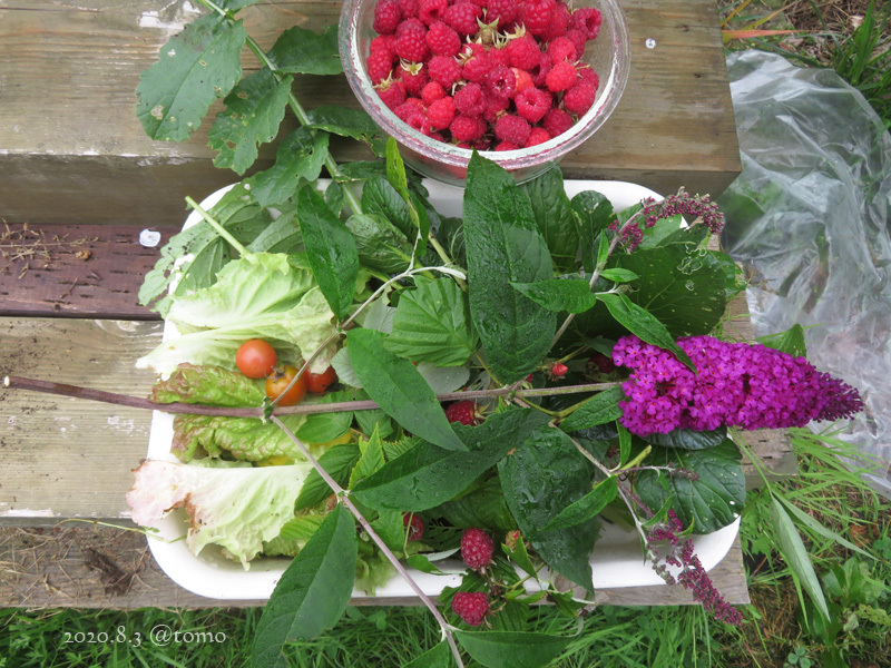 野菜の花、季節の花_f0067179_23021698.jpg