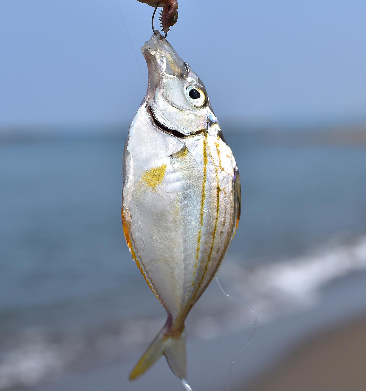 鱚釣り…のつもりが_c0095801_21384943.jpg