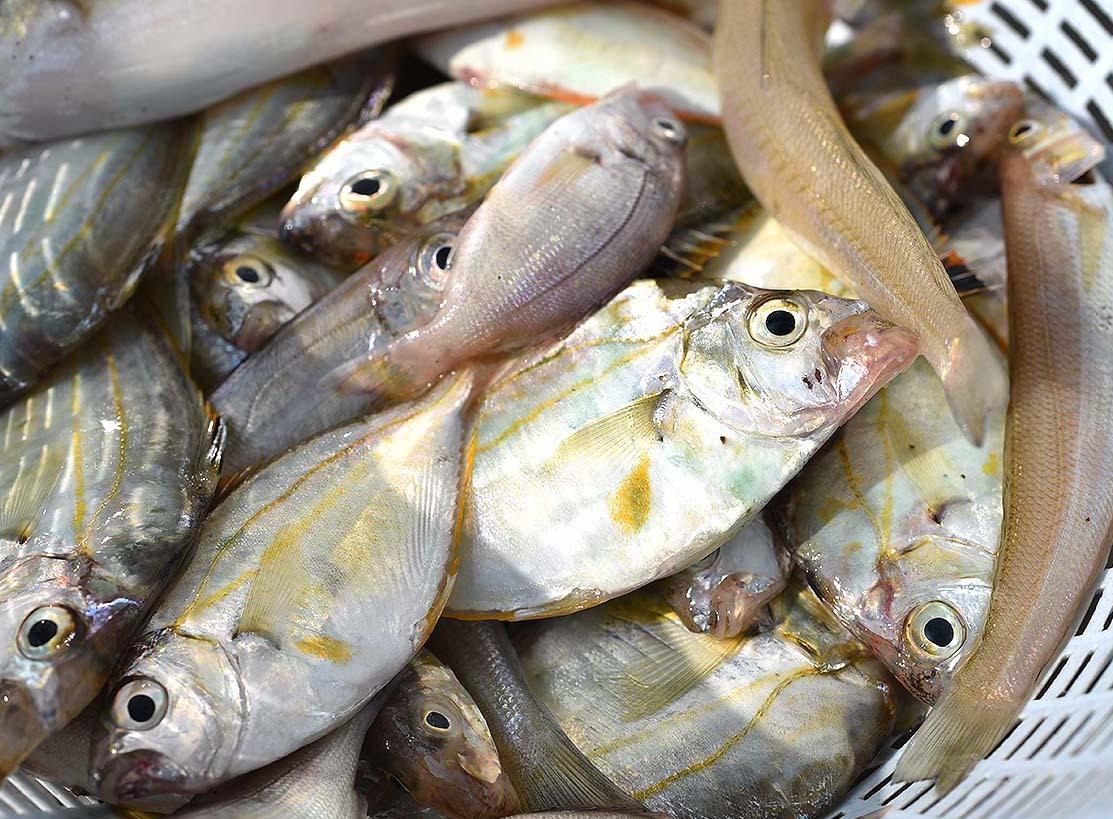 鱚釣り…のつもりが_c0095801_21385111.jpg