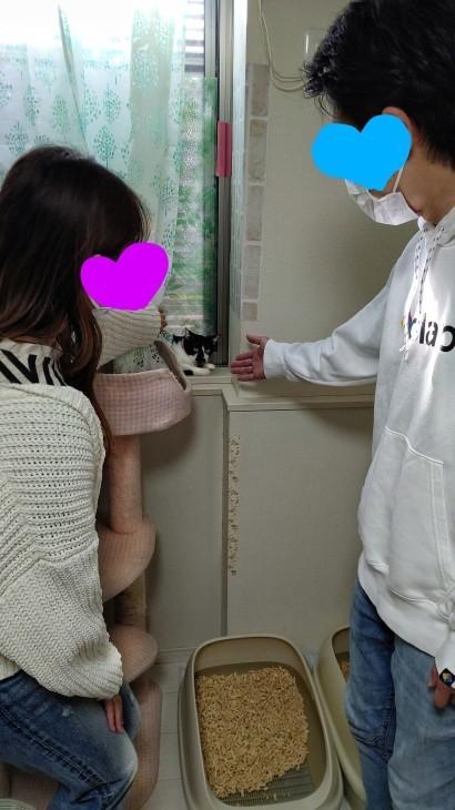 キレ子の子達ワクチン  /  クロシロ天子ちゃんお見合い_e0144012_02561736.jpeg