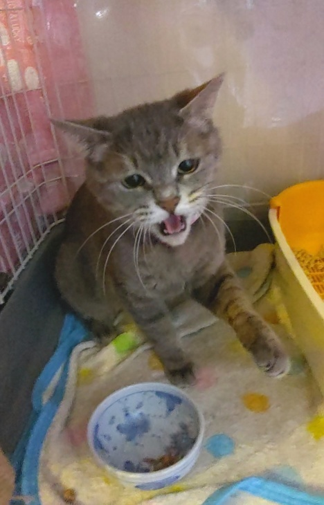 キレ子復活、冒険冒険の子猫達、ネコロボックルが気になる風鈴ちゃん_e0144012_16220608.jpeg