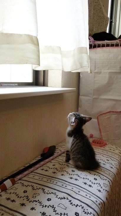キレ子復活、冒険冒険の子猫達、ネコロボックルが気になる風鈴ちゃん_e0144012_16224945.jpeg