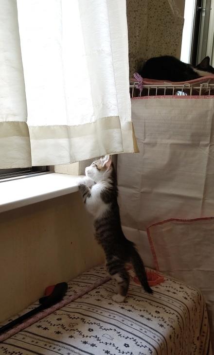 キレ子復活、冒険冒険の子猫達、ネコロボックルが気になる風鈴ちゃん_e0144012_16230061.jpeg