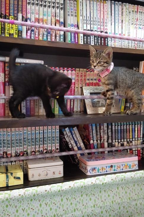 キレ子復活、冒険冒険の子猫達、ネコロボックルが気になる風鈴ちゃん_e0144012_16233081.jpeg