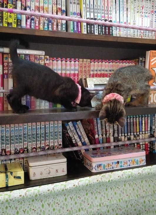 キレ子復活、冒険冒険の子猫達、ネコロボックルが気になる風鈴ちゃん_e0144012_16234378.jpeg