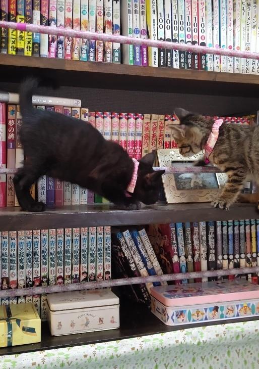 キレ子復活、冒険冒険の子猫達、ネコロボックルが気になる風鈴ちゃん_e0144012_16235169.jpeg