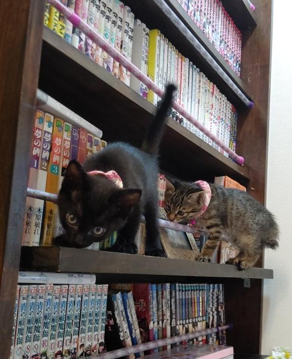 キレ子復活、冒険冒険の子猫達、ネコロボックルが気になる風鈴ちゃん_e0144012_16242566.jpeg