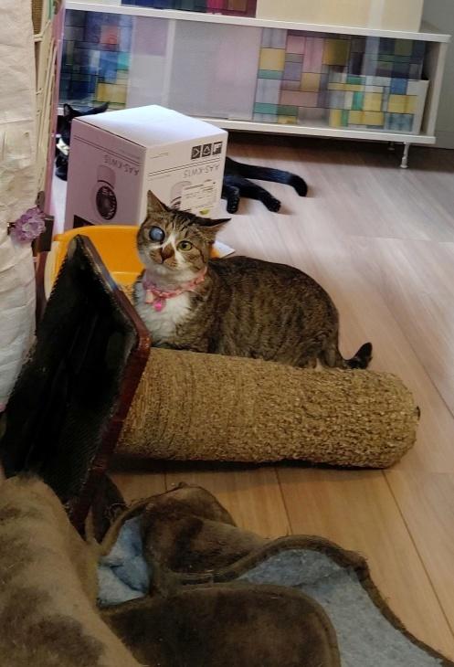 キレ子復活、冒険冒険の子猫達、ネコロボックルが気になる風鈴ちゃん_e0144012_16251745.jpeg