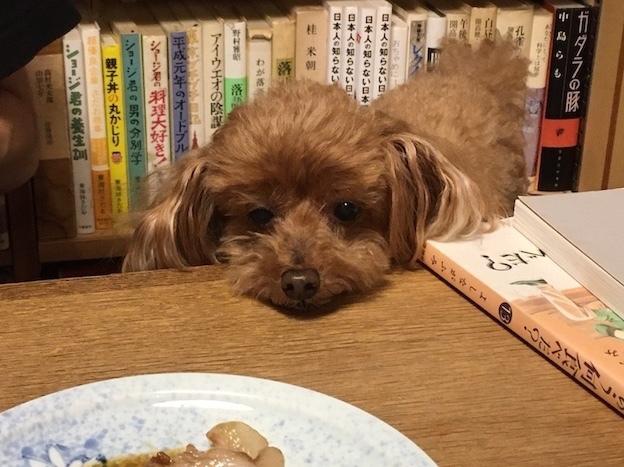 少年犬_c0016913_12075923.jpg
