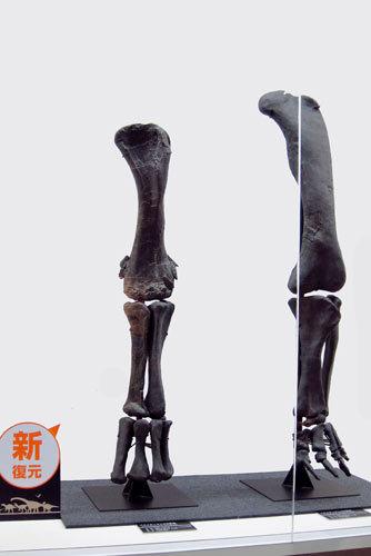 福井恐竜博物館20周年!_e0045113_18130125.jpg