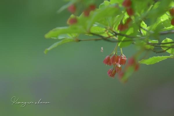5月の県森①**新緑の季節・花巡り_b0197639_17563412.jpg